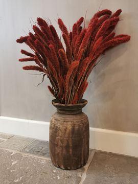 Afbeeldingen van Setaria graspluim rood 65 cm