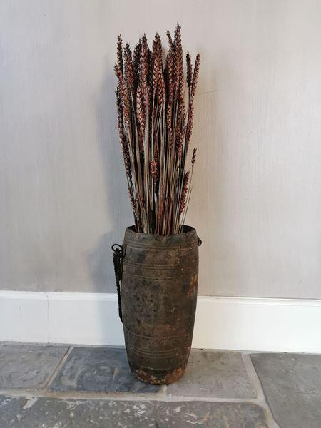 Afbeelding van Tarwe gras pluimen bordeaux rood